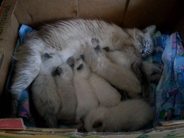 6_Nap_Time_for_Kitties