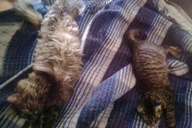 7_Cats_Stretched_Out