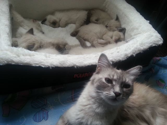 8_Mother_Cat_Awake