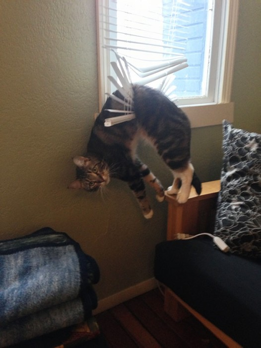 9-cats-that-instantly-regret