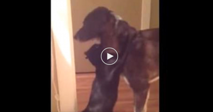 Cat Sees Dog For First Time After 10 Days…Watch The Reaction, It's UNREAL!