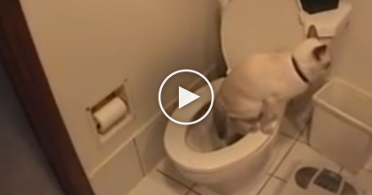 They Kept Running Out Of Toilet Paper, But Then They Discovered The Truth… Just WATCH.