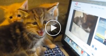 Video Of Kittens Meowing At Cats On The Screen, Just TOO Darn ADORABLE…
