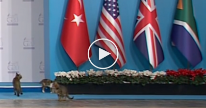 WATCH: Cats Break Through Highest Security And Beat Obama To The Stage!!