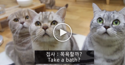 He Asks His Cats Some Questions, But The Response He Gets… Just WATCH, Hilarious!!