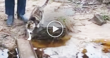 Kitty Is Confronted By A Wet Bridge, But Watch What He Does Next… WOW.