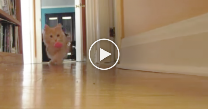 Kitty Loves To Play With His Owner, But When You Take A Closer Look… Just AMAZING.