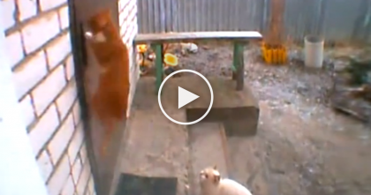 Kitty Needs Some Help And Asks His Friend, But Then Watch His Reaction… Hilarious!!