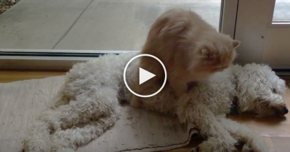 Kitty Realizes His Friend Is In Need Of Some Love, Just Watch What He Does…SO CUTE!
