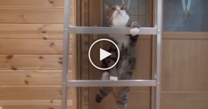 Maru The Cat Notices A Ladder, But When He Reaches The Top… It's TOO Cute!!