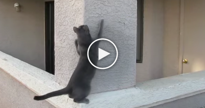 This Cat Gets Ready To Climb, But I Can't Believe What Happens Next… WOW.