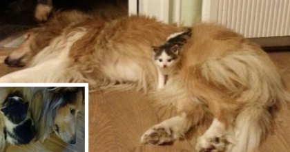 This Kitten Lost His Family, And Finds A New Mom… But It's Not Who You Think!