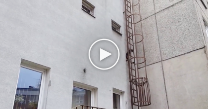 Unbelievable Super Cat Climbs Up Impossible Ladder In The Most Amazing Way… Whoa!!