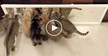 When These 10 Cats Discover The Mirror For The First Time…You Gotta See Their Reactions!