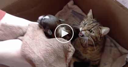 When They Introduced This Puppy To A Mother Cat And Her Kittens…Amazing!!