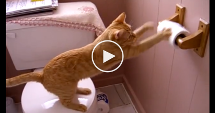 When This Ginger Kitty Discovers The Toilet Paper, He Just CAN'T Stop… Hilarious!!!