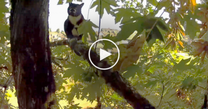 Yelping Kitty Gets Stuck In 50-Foot Tree, Just Watch This Daring Rescue…Wow!