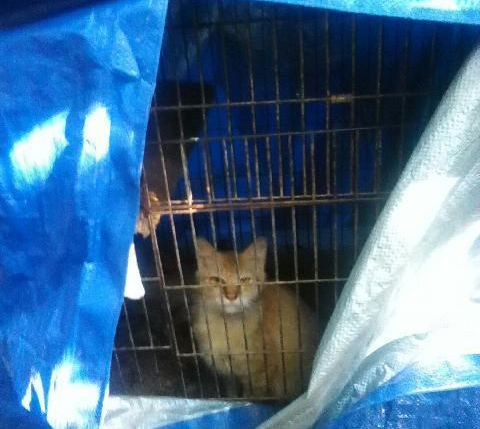 1-Cat-Kept-In-A-Bird-Cage