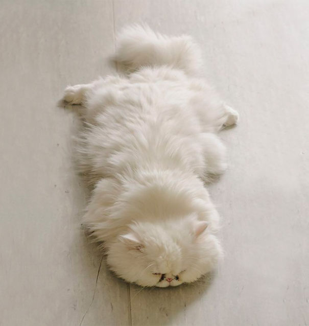 13-Fluffiest-fluffy-cats-in-the-world
