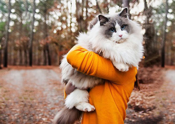14-Fluffiest-fluffy-cats-in-the-world
