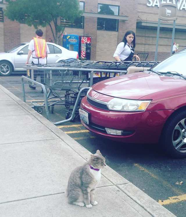 3_Cat_Outside_Safeway