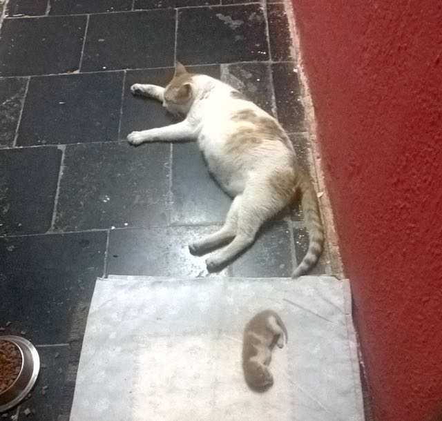 3_Mother_Cat_Floor