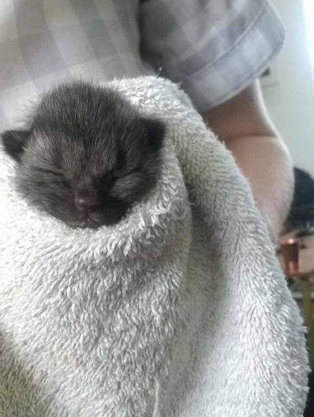 5_Kitten_Wrapped_In_Towel