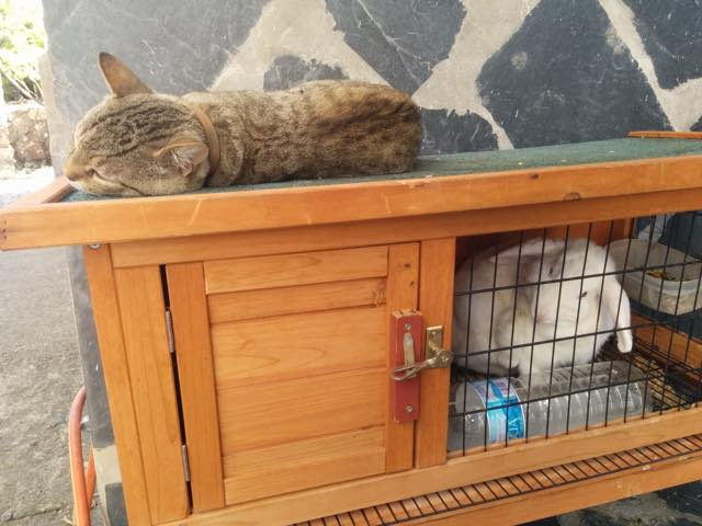 8_Cat_Naps_On_Rabbit_Hutch