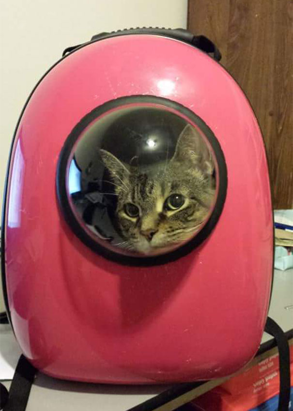 astronaut-pet-bubble-carrier-upet-8