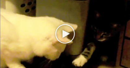 Cat Tries To Be Sneaky, But Ends Up Fooling No One… Just Watch it, HILARIOUS!
