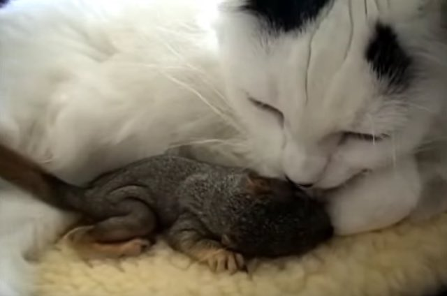 cat-with-squirrel