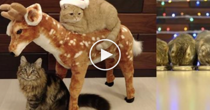"Christmas With 10 Cats Is The Happiest & ""Meowiest"" Holiday Anyone Can Have… Just WATCH."