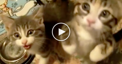 It's Time To Eat, Now Watch These Tiny Meowy Kittens…They're Are Too Excited To Handle Themselves… OMG.