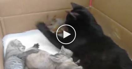 Cat Family Adopts Stray Animal, And It's NOT Another Kitten…Just Take Another Look!!