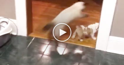Kitty Is Obsessed With His Puppy Friend…Just Watch What He Does, SOO Cute!!