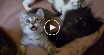 Kitty Notices The Birdie Toy In The Air, But Can't Stop Smiling…Just Watch, SOO Cute!