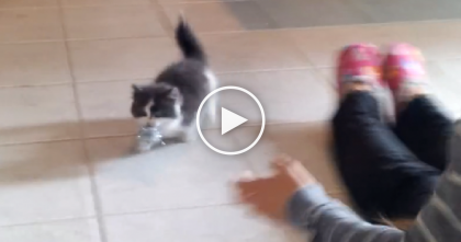 Little 9 Week Old Kitten Teaches His Human How To Play A New Game…And It's Cuter Than Ever!