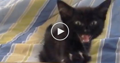 Little Black Kitten 'Quacking' And Purring; Just TOO Adorable… It'll Make Your Day!!