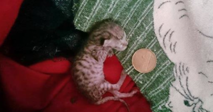 Nobody Thought This Tiny Kitten Would Make It, But They Never Gave Up… This Is AMAZING.