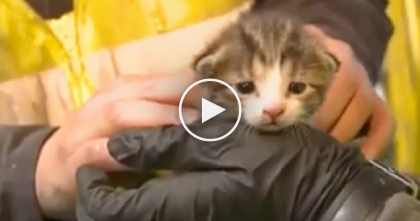 Spinning Blades Nearly Chop Up Tiny Kitten, But Luckily A Worker Noticed Just Moments Before…