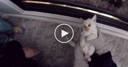 They Found A Frozen Kitten In The Snow, But Hours Later… I Can't Believe This Happened!