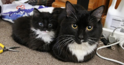 They Saw A Stay Kitten In Their Backyard, But When They Got Closer… SOO Cute!!