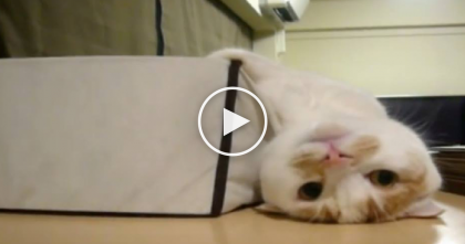 Kitty Finds The Most Relaxing Spot In The House, and Just Wait Till You See It… WATCH.