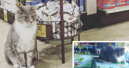 This Kitty Goes To Safeway Every Day For One Special Reason… This Is Adorable!!