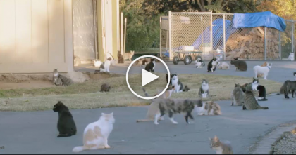 This Woman Has Over 1,000 Cats…But When You See Why, You'll Be Totally Amazed.