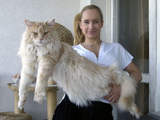 12_Man_Holding_Maine_Coon_Cat