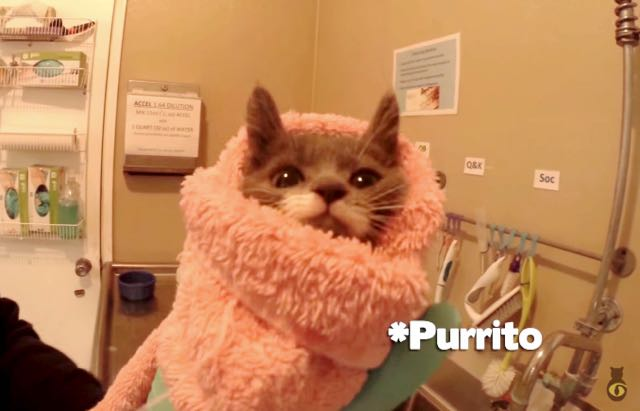 24-hour-kitten-nursery-does-something-amazing-for-cats-who-are-nearly-euthanized-3
