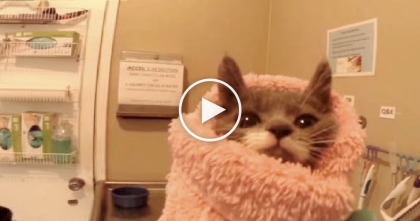 24-Hour Kitten Nursery Does Something Amazing For Cats Who Are Nearly Euthanized…