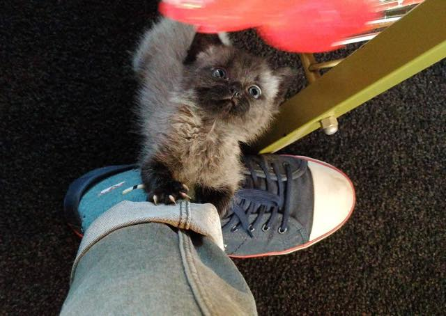 7_Kitten_Hugs_Foot