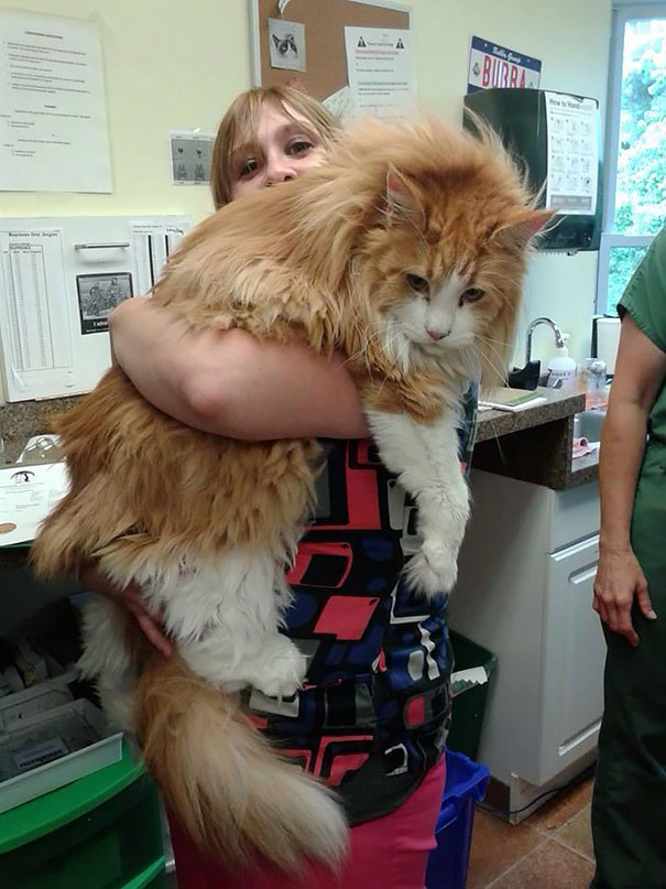7_Woman_Holding_Huge_Maine_Coon_Cat